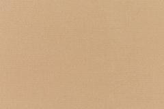 Canvas-Camel