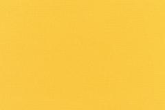 Canvas-Sunflower-Yellow